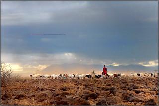 Africa || Shepherds of savannah