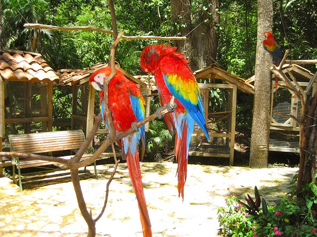 endangered-macaws-center