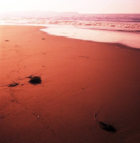 120 tlr film beach rolleiflex xpro sand fuji marincounty pointreyes velvia100 limantour creamme eelgrass cmburn
