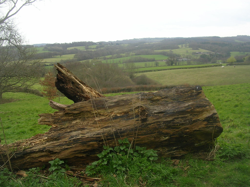 Log with a view Stonegate to Robertsbridge