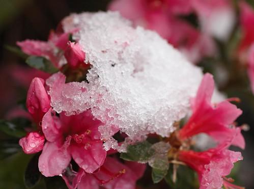 Macro Snow and Flowers by Luke Robinson