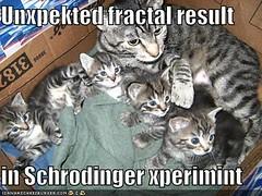 funny-pictures-cat-kittens-fractal-schrodinger-back