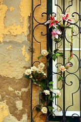 Flores e janela
