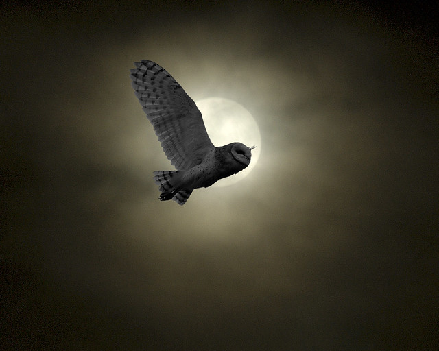 moon, owls and birds - a gallery on Flickr