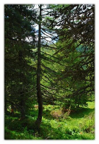 alps tree österreich green austria alpen hohetauern bösenstein scheibelsee edelrautehütte