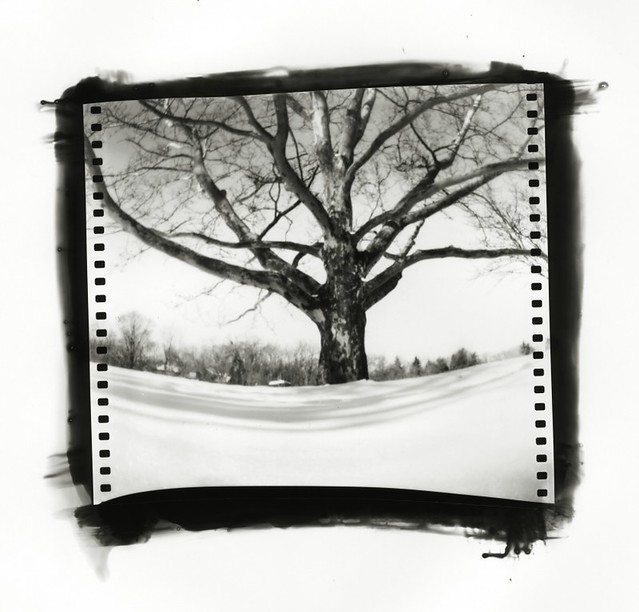 Pinhole: Virginia Park