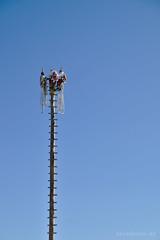 Voladores en Papantla en Chapala ..