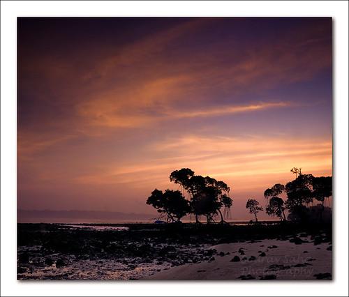 india color colour tree beach digital sunrise nikon dslr soe havelock andaman d80 mywinners abigfave elephantabeach