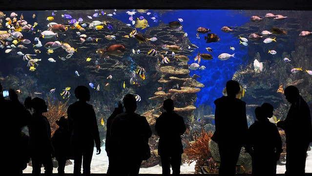 4516254331 9faefa9cca z Top Ten Aquariums in the United States