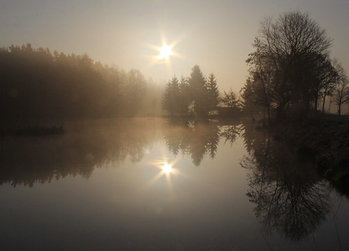 morning light sun mist reflection tree smile sunshine sunrise germany pond village warmth thuringia nadelbaum schackendorf
