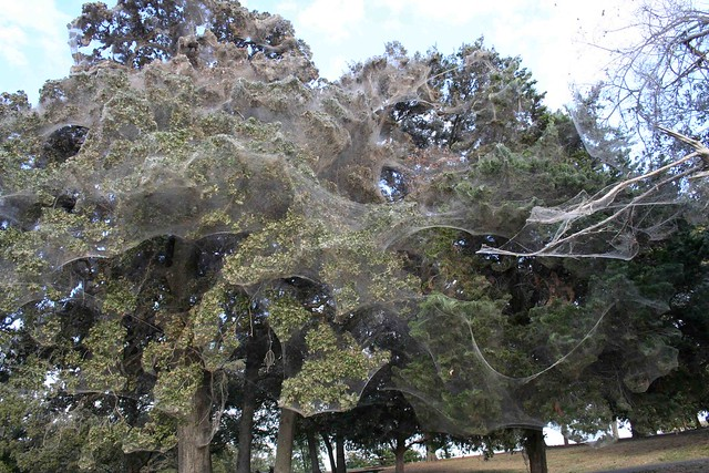 giant spiderweb texas