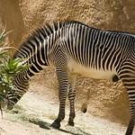 Los Angeles Zoo 030