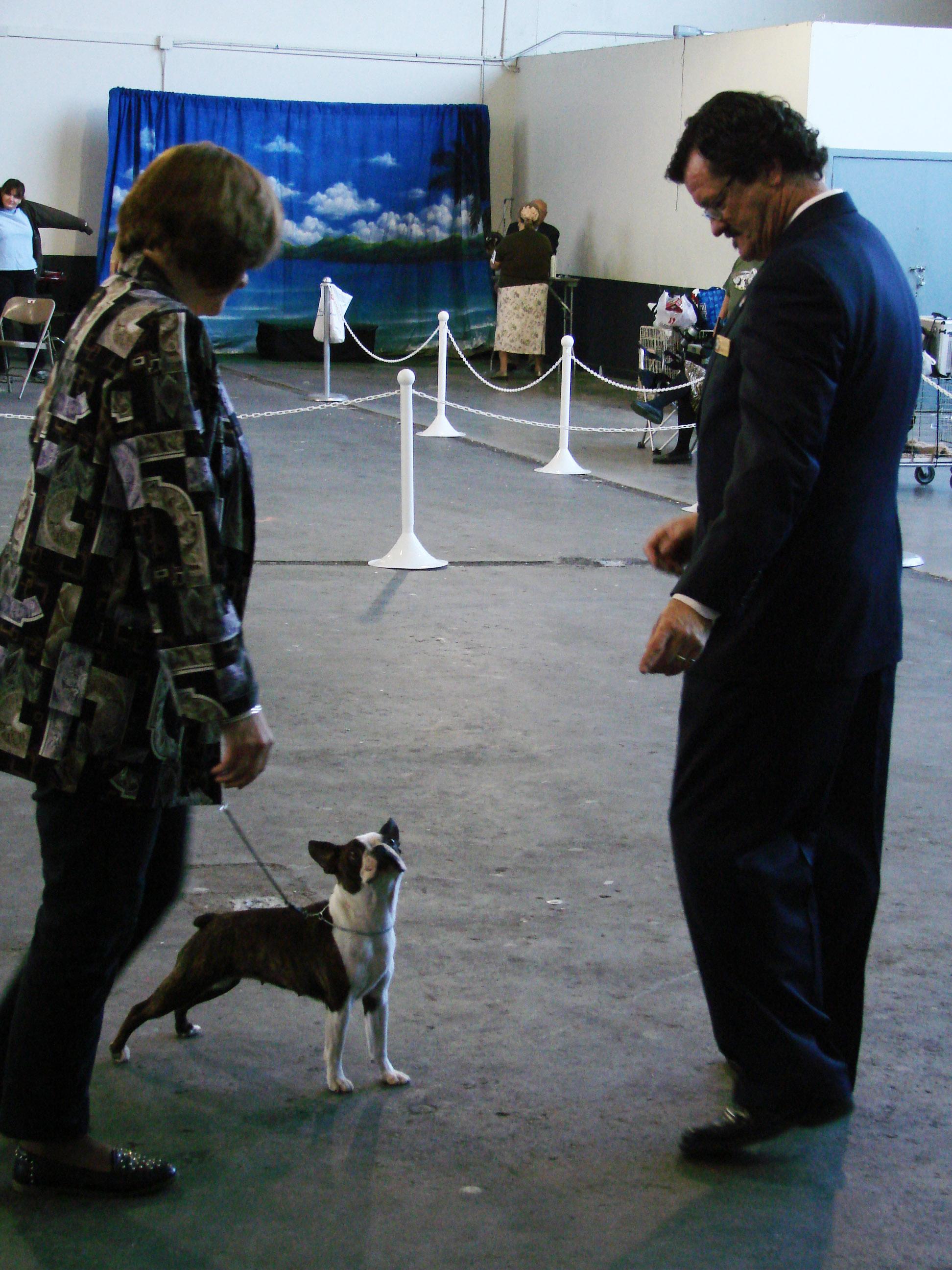 Napa Mobile Dog Grooming