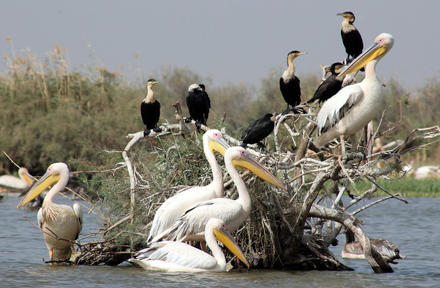 Birds Galore