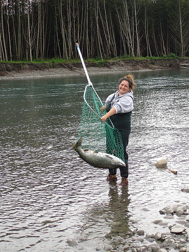Hoh king salmon in a net flickr photo sharing for Hoh river fishing