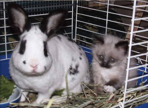 baby charlene and the bunny