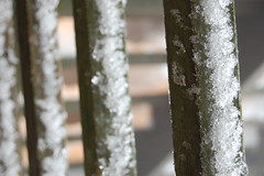 winter, white, nature, ice, frost, trunk, close-up, freezing,