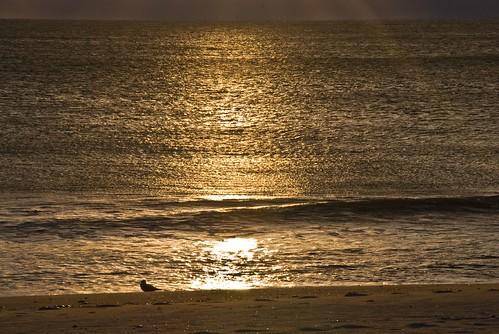 ocean morning sun beach sunrise catchycolors gold rising dawn atlantic rise atlanticocean risingsun