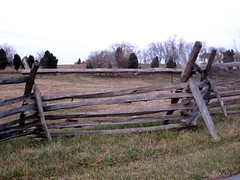 outdoor structure(0.0), home fencing(1.0), fence(1.0), wood(1.0), split rail fence(1.0), tree(1.0),