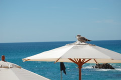 Los Cabos Westin Sea Gull