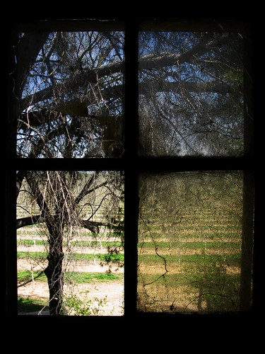 california ca old blue trees sky house green abandoned window grass dark bright orchard abandonedhouse cracks cracked gerber g9 genine powershotg9 haieakala haieakalawalnutshellingplant