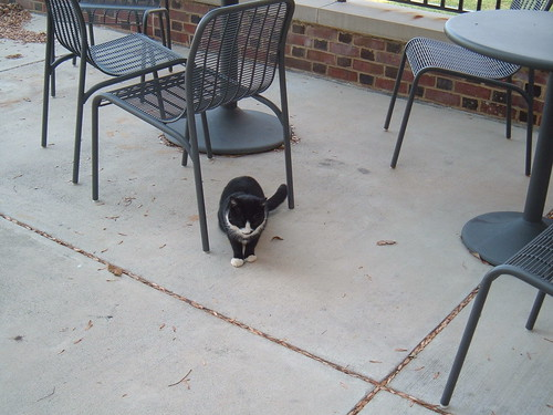 Sweet Briar Cafeteria Kitty Cat
