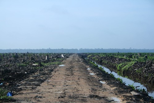 Oil Palm Concession