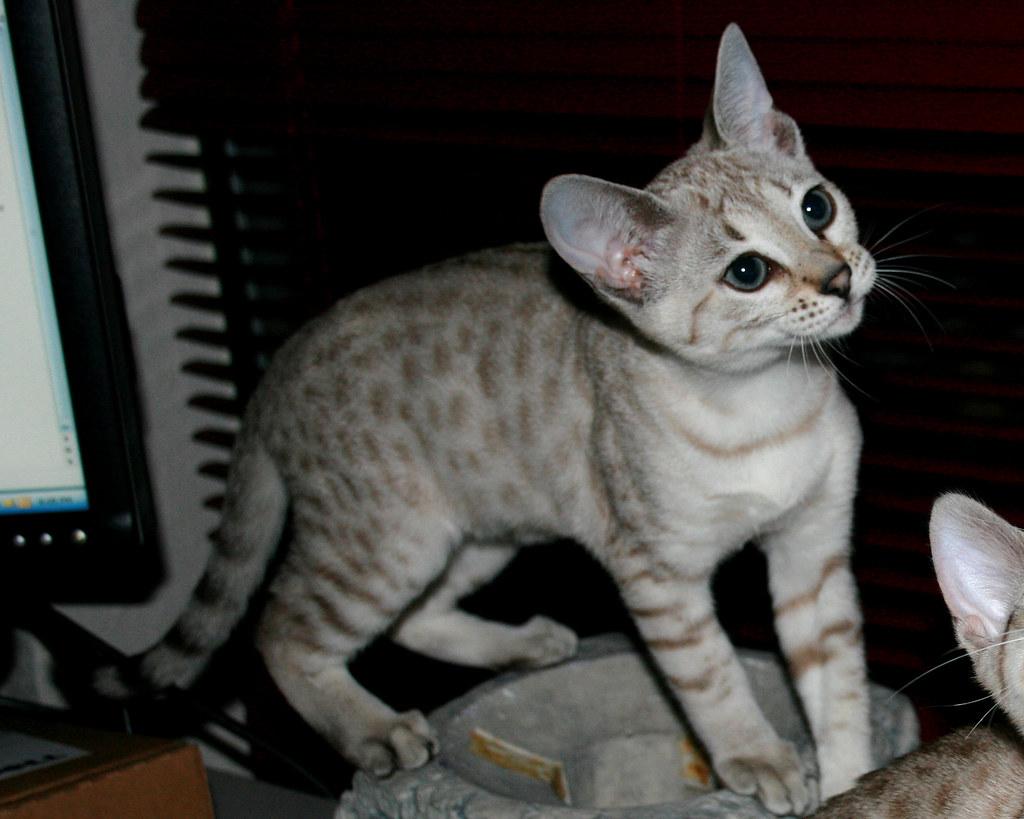 hentai prince and stony cat