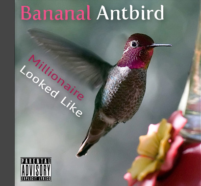 banal_antbird