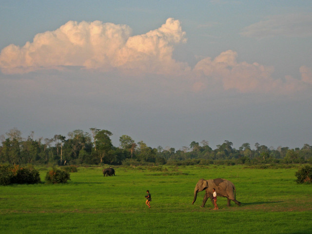 Elephant and mahout in Khiet Ngong, Laos by flickr user gardnergp