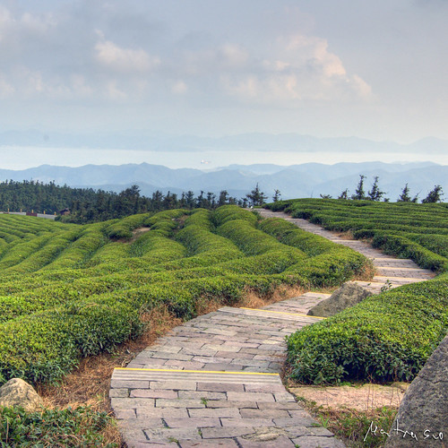 Tea Mountain: Path