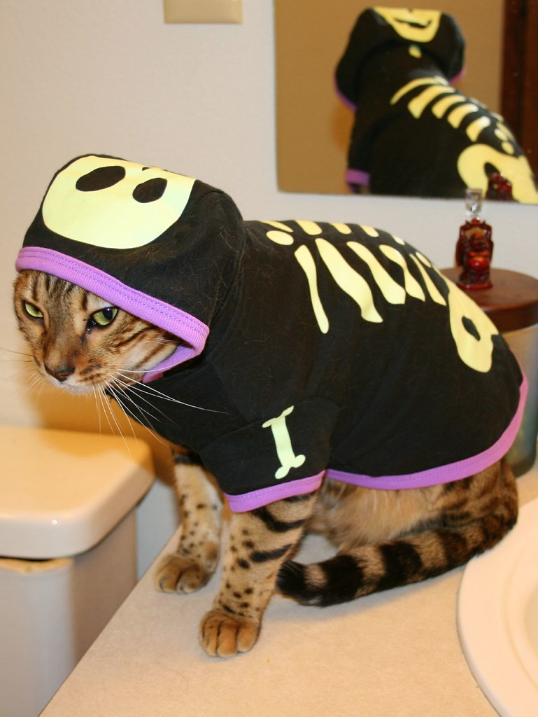 1809241618 f4b88dffe6 b A Caturday Collection, Cats in Costumes Ready for Halloween