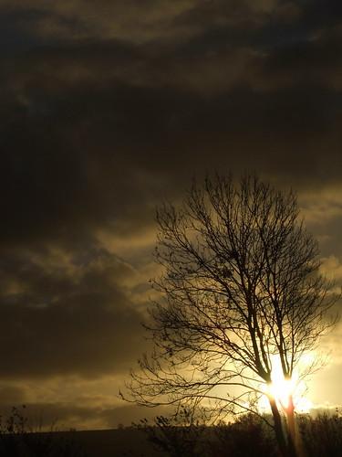 tree clouds sunrise s9600 fujifilmfinepixs9600