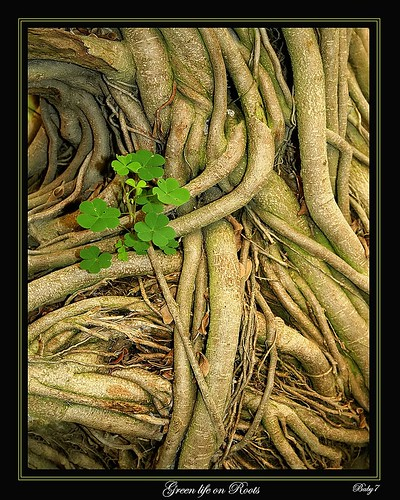 Green Life on roots by baby7