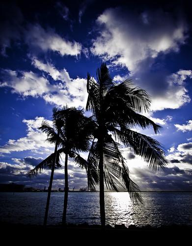 blue sunrise miami palmtree breathtaking theblues goldenglobe blueribbonwinner photographyrocks qualitypixels mostbeautifulpictures flickrunitedaward today´sbest favtop35