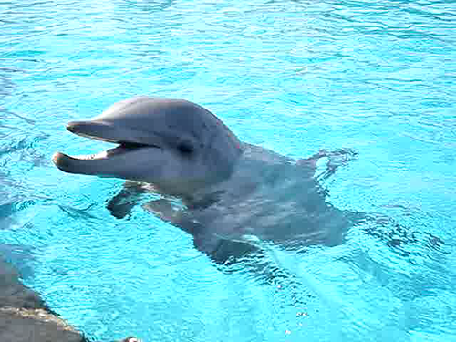 Dolphins Video At Sea World