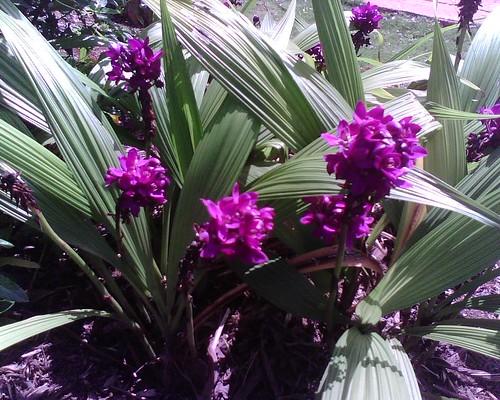 Purpleish flower