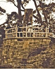 Surveyors Tree (1900)