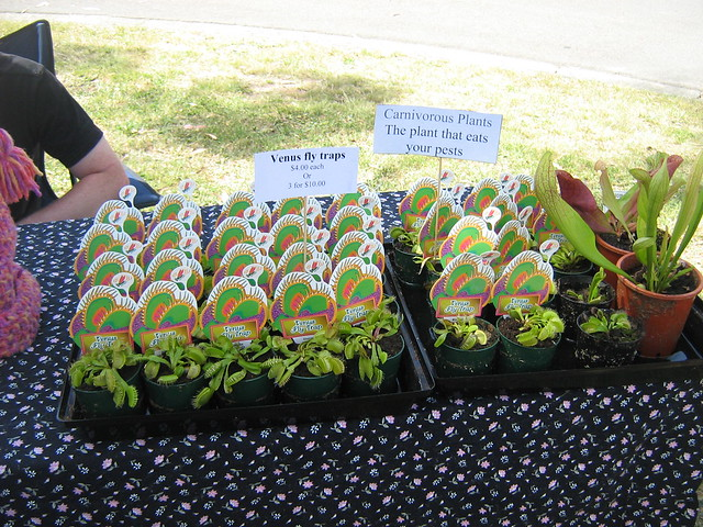 Carnivorous plants for sale flickr photo sharing for Plants for sale
