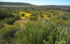 nature reserve, woodland, prairie, shrubland, plain, plant, flora, natural environment, meadow, landscape, wilderness, biome, pasture, vegetation, rural area, grassland,