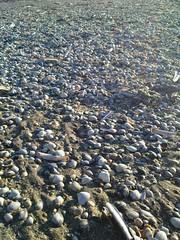 Hardlopen op het strand  van Scheveningen met Zora (9)