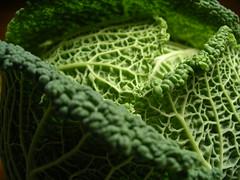 brassica(0.0), produce(0.0), food(0.0), momordica charantia(0.0), gourd(0.0), savoy cabbage(1.0), vegetable(1.0), leaf(1.0), green(1.0),