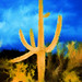 Saguaro, Twilight, Tucson