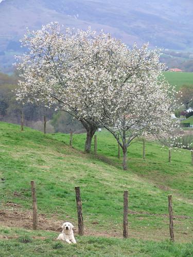 trees árboles euskalherria basquecountry paysbasque animaliak paísvasco zuhaitzak lapurdi gr10 ainhoalapurdi