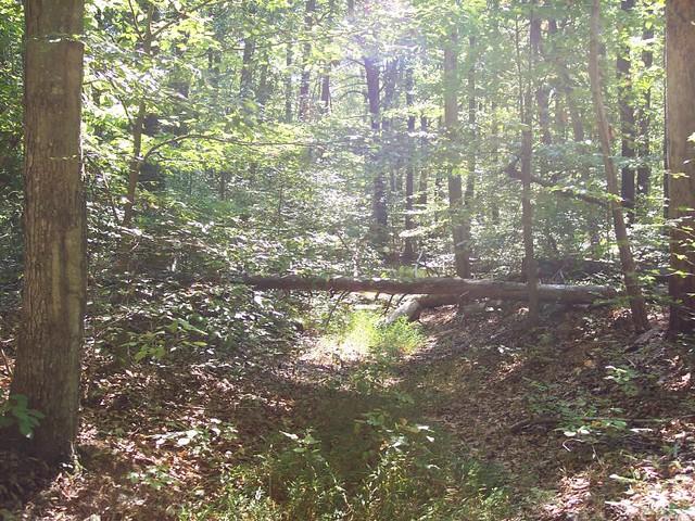 green wildness by Cumberland Lake