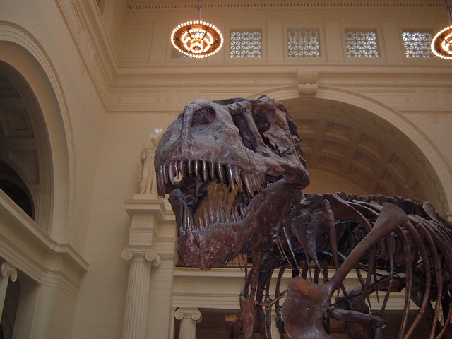 Sue T-Rex at Chicago Field Museum