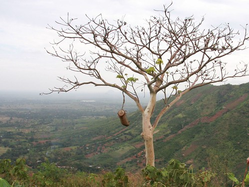 Photograph of a beehive in a tree overlooking a hill