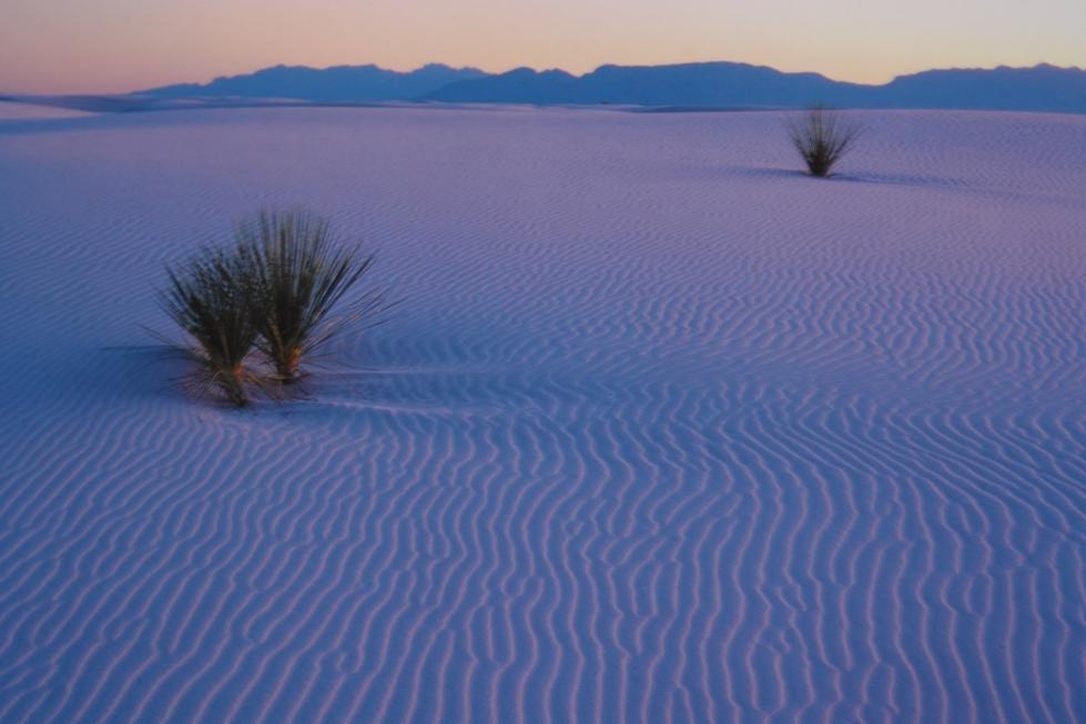 El atardecer en White Sands en una experiencia única, donde se disfruta de unos colores de cielo fuego y unas dunas que se vuelven de color rosa ... white sands, un desierto único que cambió el mundo - 2527780817 1ce9bdd086 o - White Sands, un desierto único que cambió el mundo