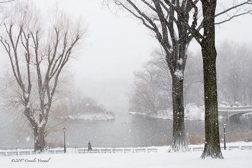 centralpark snow thelake winter blizzard olympusem5 lumixgvario1235f28