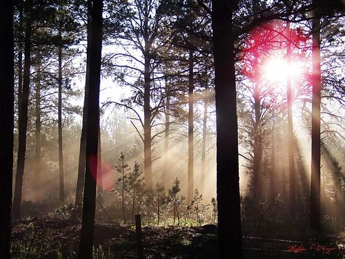 morning trees light sun mist fog forest sunrise glow kodak streaks blackforest 1on1sunrisesunsetsphotooftheweek z1012is 1on1sunrisesunsetsphotooftheweekjuly2009